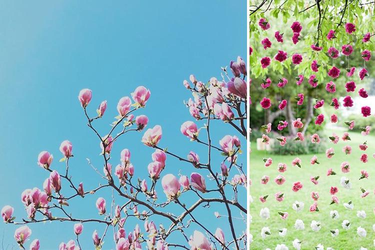 Magnolias v2
